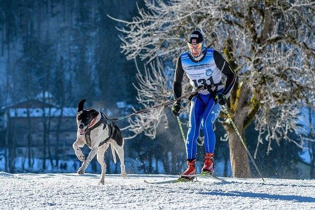 dog-sled-4766400_640