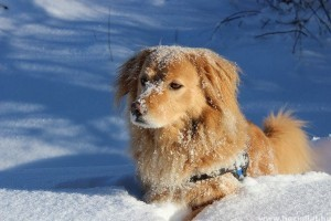 Tippek - hogyan teheted kutyás téli vakációdat zökkenőmentessé