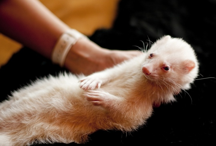 white-puppy-animal-pet-portrait-mammal-651417-pxhere.com