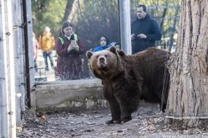 Balu, a medve meglátta árnyékát - de mit is jelent ez?
