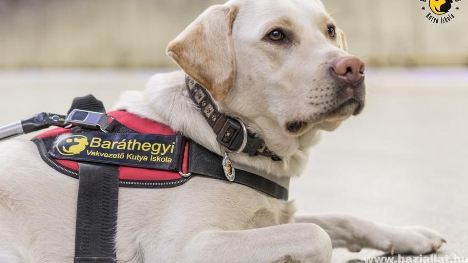 A vakvezető kutyával közlekedőknek joguk van belépni mindenhová