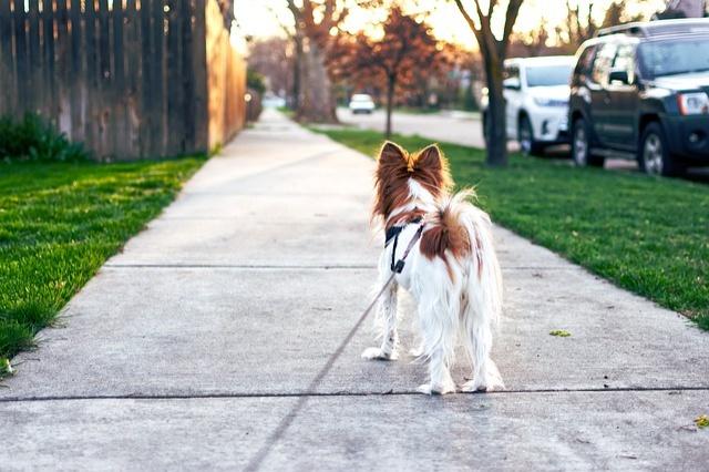 dog-4259565_640