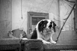 Hogyan szoktassuk le házilag kutyánkat az ugatásról?