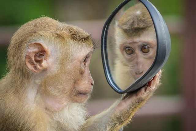 monkey-3512996_640