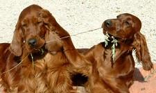 vicces-kutyak