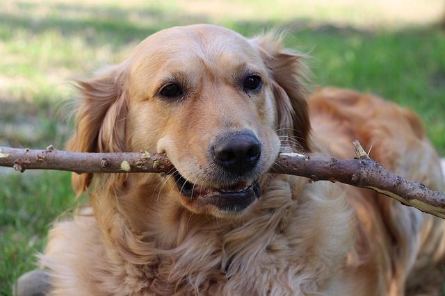 dog-3594546_640
