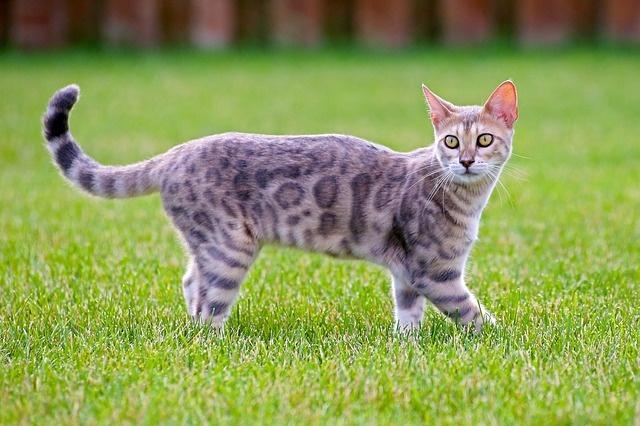 cat-3959046_640