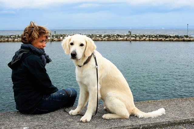 white-dog-2897935_640