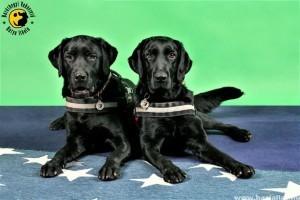 A vakvezető kutyák veszélyben vannak pihenőidejük alatt
