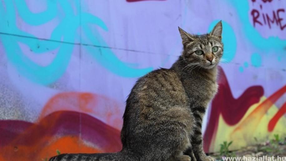 Gyűjtést indít a Rex Alapítvány egy macskakolónia ivartalanítására