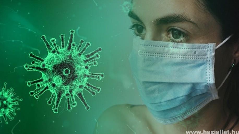 Járványügyi ajánlások az állatorvosi rendelőkben is!