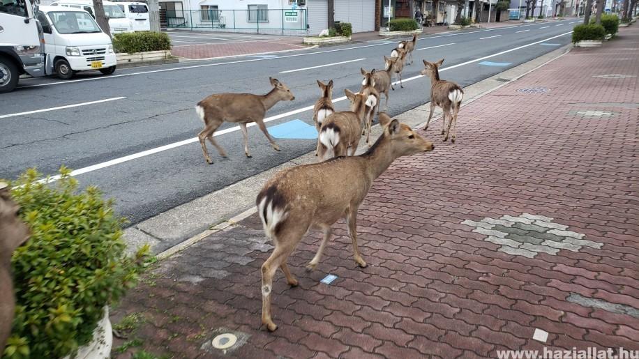 Az emberek helyét átvették az állatok a kiürült városokban