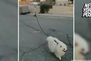 Drón sétáltatja a kutyát Cipruson