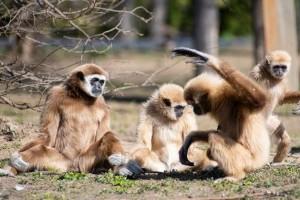 Állatkerti élet a koronavírus alatt