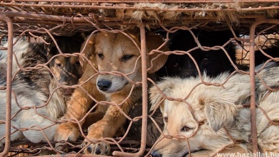 Tilos lesz megenni a kutyát és a macskát a dél-kínai Sencsenben
