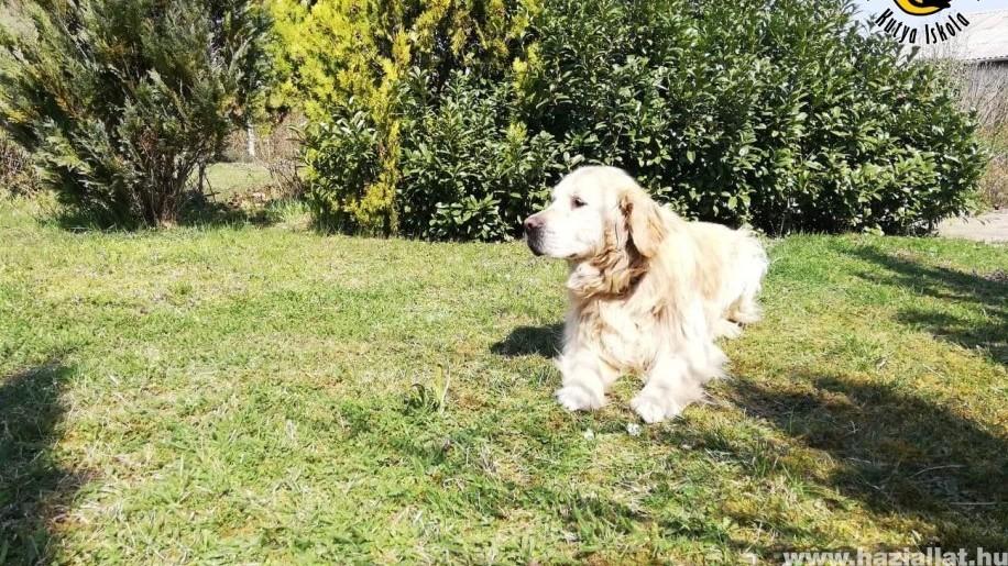 Gazdit keres Nico a nyugdíjas vakvezető kutya