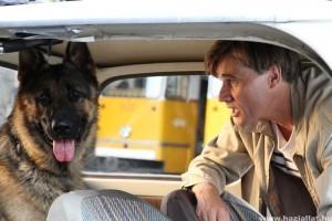 A 10 legjobb állatos film, amivel gyorsabban telik a karantén