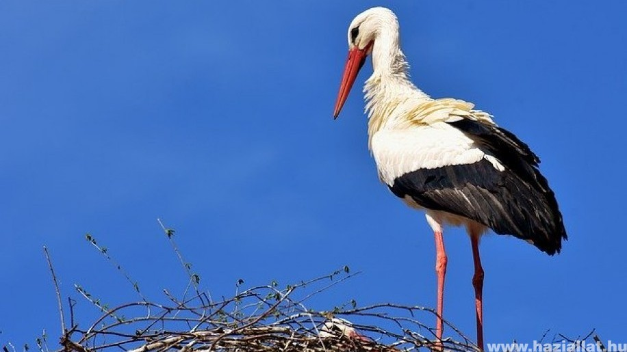 Így segítik a gólyákat