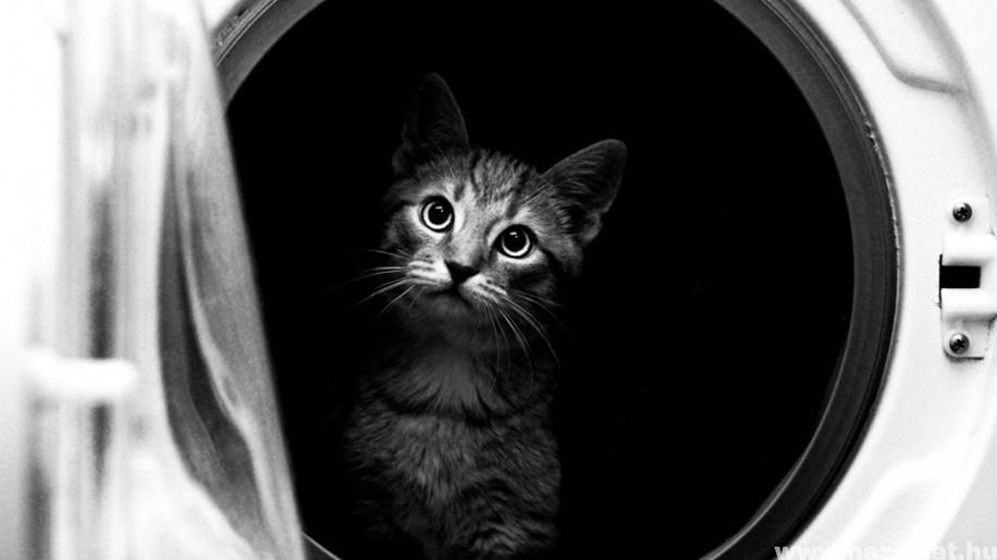 Borzalom - véletlenül kimosták a macskát