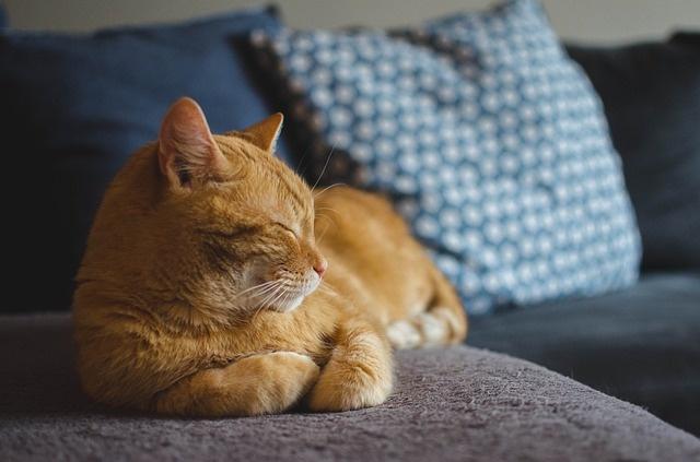 macskaalszik