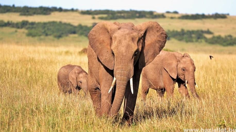 Állati rekordok - az állatvilág legnagyobbjai, leggyorsabbjai