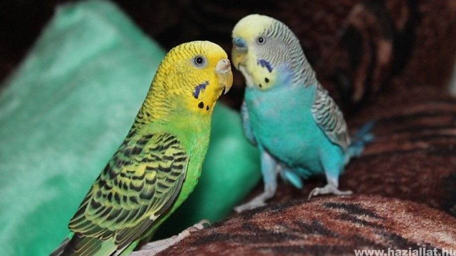 Az 5 legnépszerűbb papagáj
