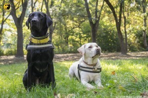 Ünnepljük a vakvezető kutyákat