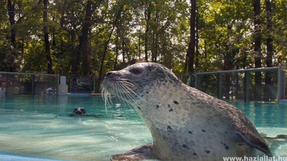 Mától több vidéki állatkert is újra kinyithat