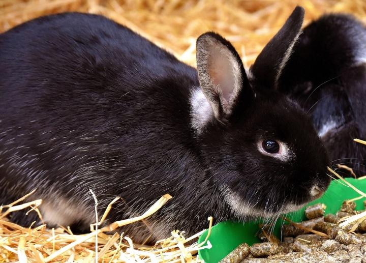 rabbit-3080706_1280
