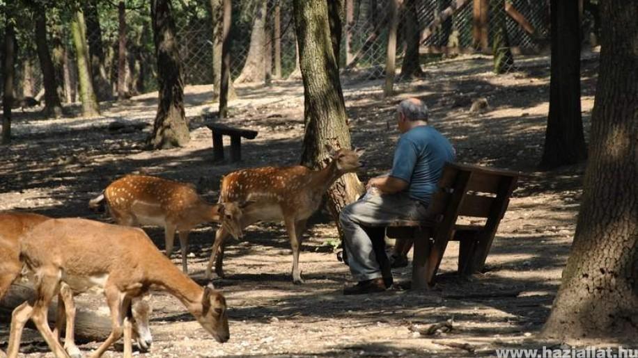 Mától újra látogatható a Budakeszi Vadaspark
