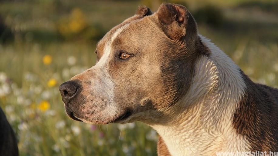 Kutya támadt egy nőre és két gyerekre Csepelen