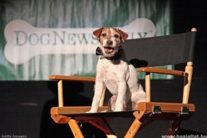Ez a kutya nyerte a jubileumi kutyasztár-versenyt