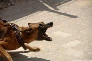 A kutyáját uszította a rendőrökre az ittas férfi