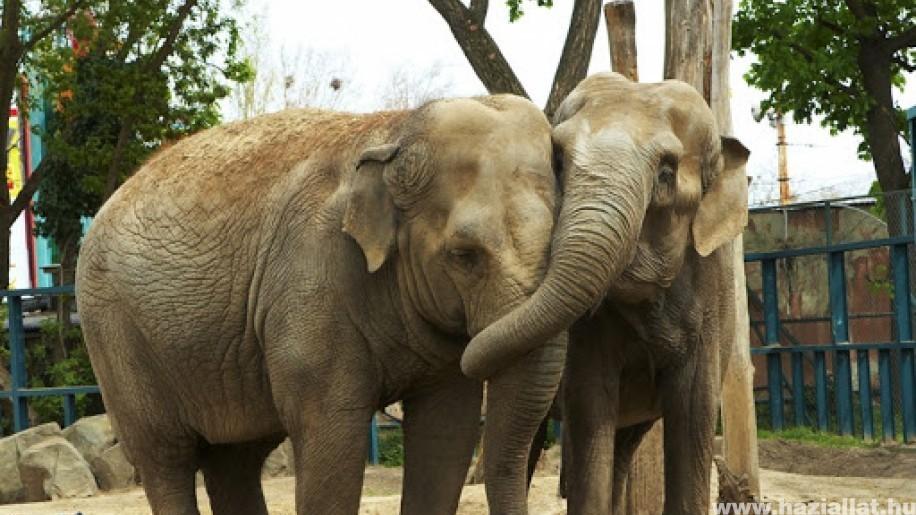 Négyezren mehetnek naponta a Fővárosi Állatkertbe