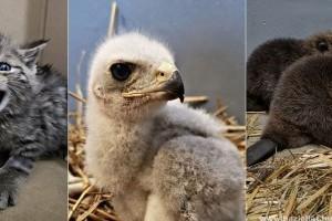 Több mint 500 mentett vadállat fél év alatt a Fővárosi Állatkertben