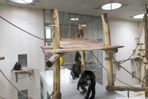 Ezután itt laknak majd a győri csimpánzok