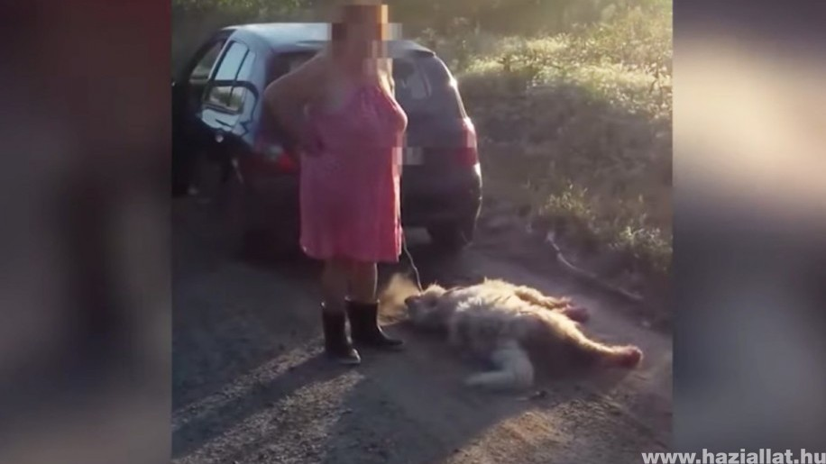 Felháborító - Csak felfüggesztett börtönt kapott a kutyáját az autó mögé kötő asszony