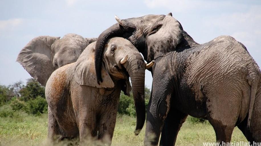 Vizsgálják hogyan hatott a járvány az állatvilágra