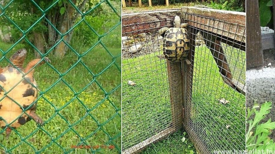Szabadulóművész teknősök! Láttál már ilyet?