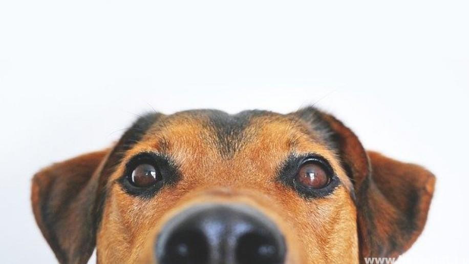 A te kutyád tudja mit csinál?