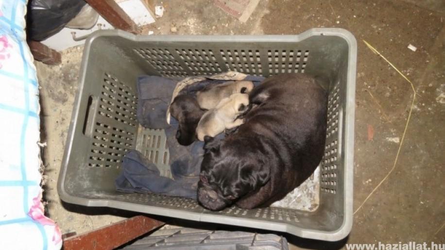 Végre - Állatkínzók letartóztatását indítványozza az ügyészség
