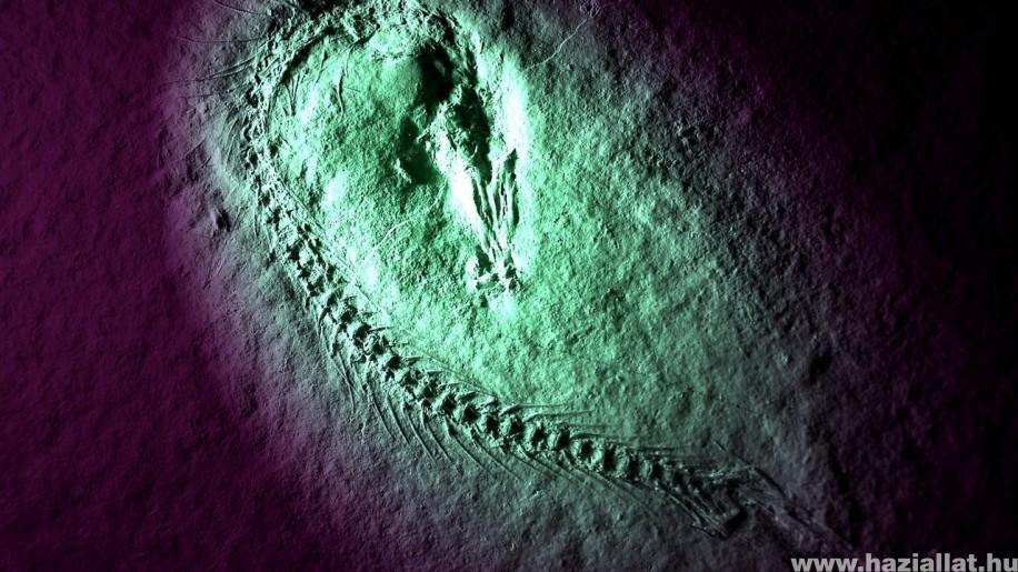 70 millió éves 6 méteres óriáshal maradványára bukkantak Argentínában