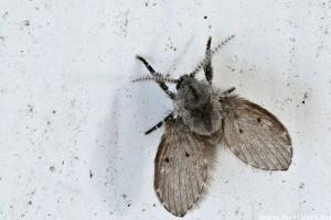 Életveszélyes szúnyogok fenyegetik a Horvátországban nyaralókat