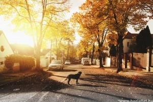 Kiderült: a Föld mágneses mezőjét használva találnak vissza a gazdájukhoz a kutyák