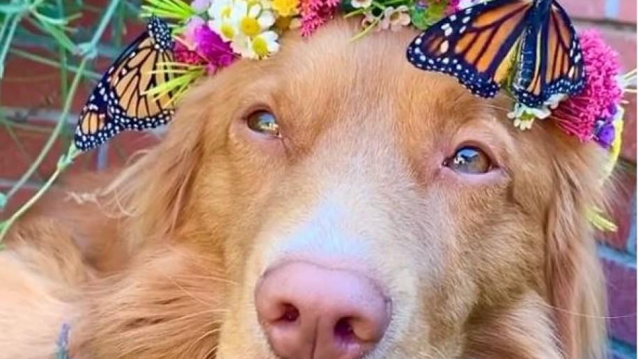 Fotókon a kutya és a lepke különleges barátsága