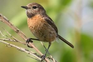 Ez az énekesmadár lett 2021 madara itthon