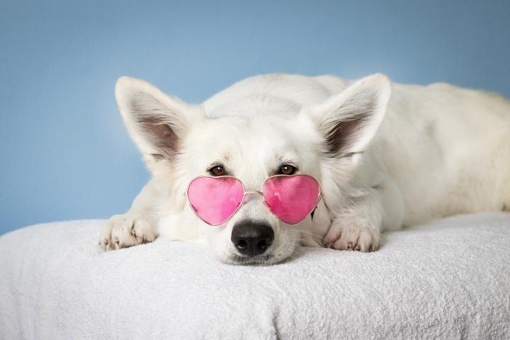 medium-short-coated-white-dog-on-white-textile-2607544