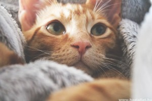 A te macskád is így viselkedik otthon? Egy nő nem hitt a szemének, amikor visszanézte a kamerafelvételeket