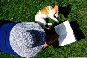 Miért kapnak hőgutát a kutyák nyáron?