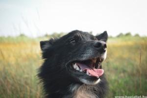 Kutya fogápolás helyesen: így tarthatod egészségesen kedvenced fogait (x)